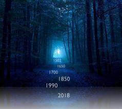 dark-blue-forest-wallpaper-preview